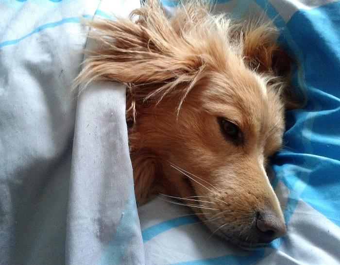 Postel pre psa s dekou