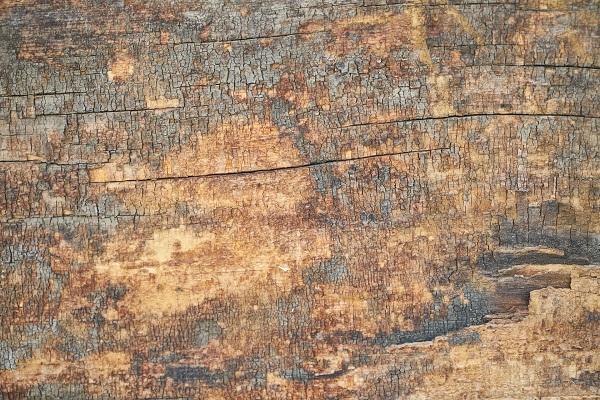 Moridlo a farba na drevo exterier
